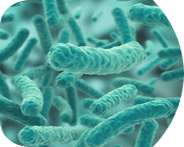 бактерии для ergobox 4 pr